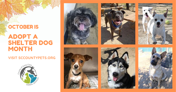 October is Adopt a Shelter Dog Month